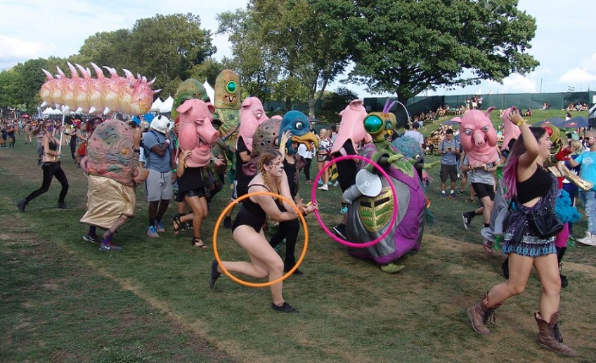 EZOO Review 2016 Pigs