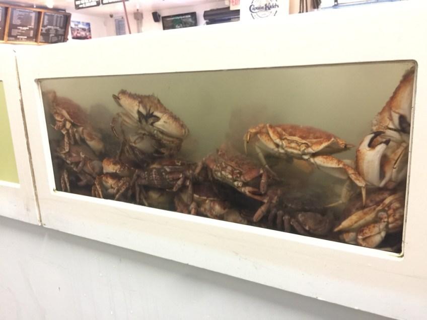 Captain Kidd's Crab Aquarium