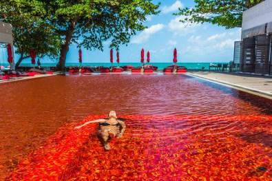 The Library Pool, Tajska