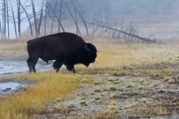 © Yvonne von Allmen. Foto Reise Yellowstone NP