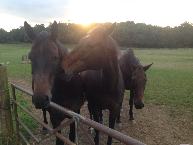 Five ways to spot a horsey girl