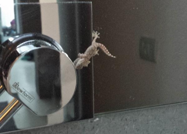 Zash Country Boutique Hotel Sicily Garden Room Lizard