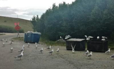 kenai peninsula soldotna landfill
