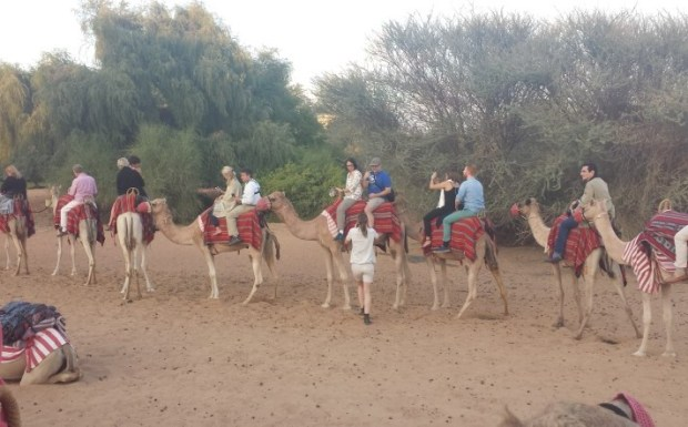 Al maha desert resort camel train