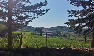 Tuscany wine tours isole e olena approach