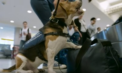 customs beagle confiscate food