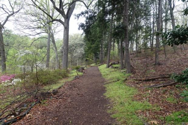National Arboretum DC azalea trail