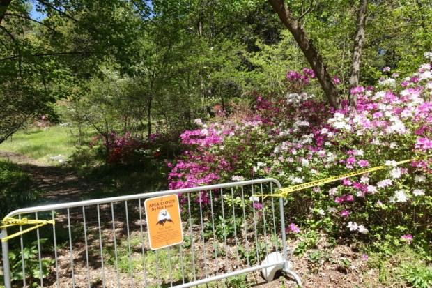 National Arboretum DC eagle closures late April