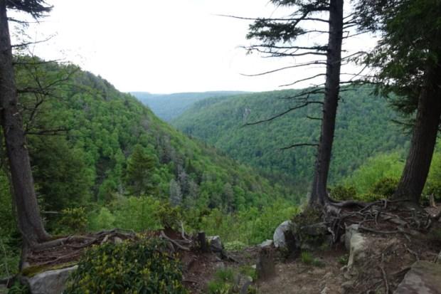 blackwater falls lodge canyon view