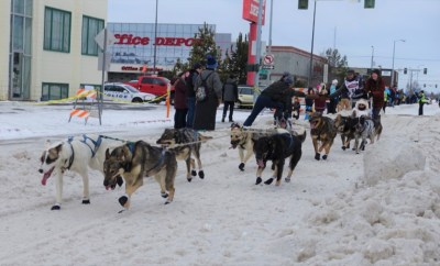 2016 Iditarod Race close up