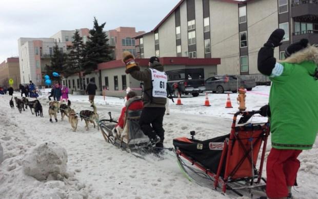 2016 Iditarod Race dog team