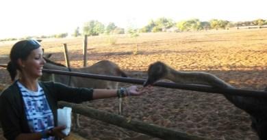 Emus hurt.