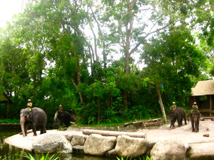 Elephant Show at Singapore Zoo