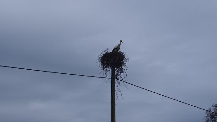nid de cigognes