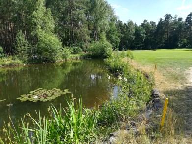 Der Teich ist nett angelegt