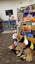 Heide's Pet Care Store