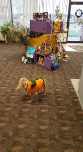 Izzy shopping at Heide's Pet Care Store