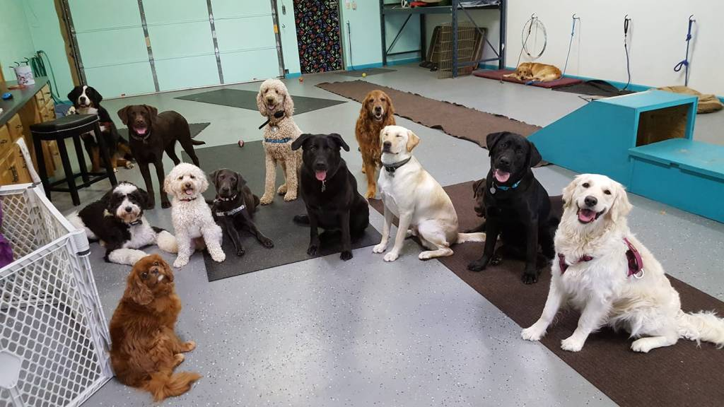 Dog Training Doggies can learn Good Manners and have fun