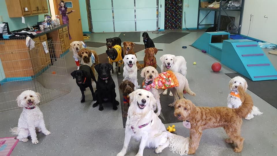 About Heide's Pet Care