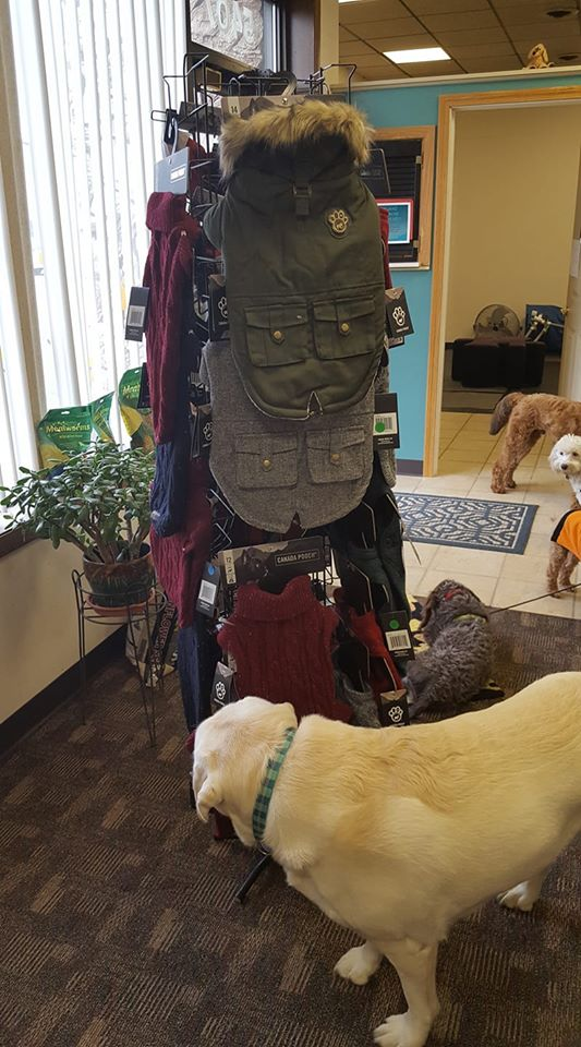 Is your dog ready for the winter? We got you covered!