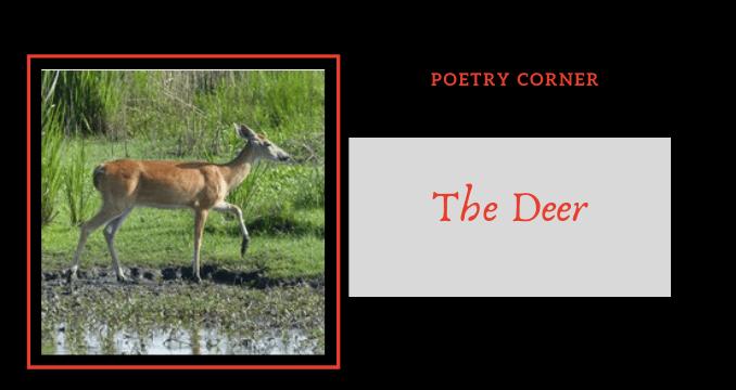 Poetry Corner- The Deer