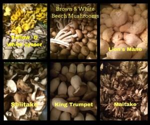 correct mushroom photo