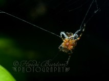 19th August 2013 - Incey Wincey Spider