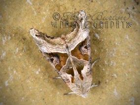 29th September 2013 - Moth