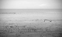 8th december 2013 - Weston beach