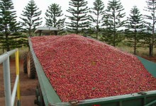 trailer of red coffee beans