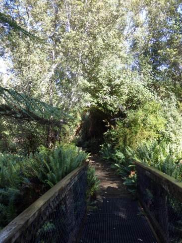 Hastings Thermal Springs reserve