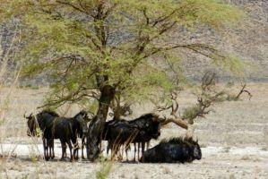 Wildlife_in_Namibia