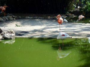 Flamingo_Gardens_Davie_Florida