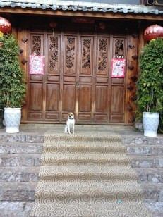 Im Naxi Dorf gibt es die süßesten Hunde