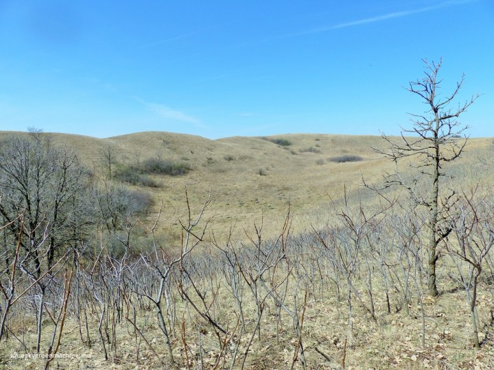 deciduous woods and scenic view at glacial lakes state park