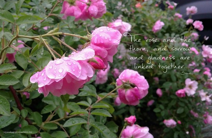 a rose with raindrops with the quote: The rose and the thorn, and sorrow and gladness are linked together by Saadi