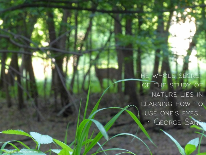 photo of grass with blurred deer in the background along with the quote: The whole secret of the study of nature lies in learning how to use one's eyes...  George Sand