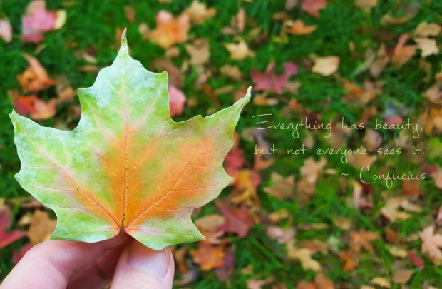 "Confucius quote ""Everything has beauty, but not everyone sees it"" with fall leaf"