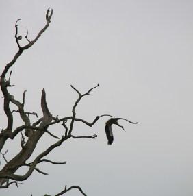 ... und schon ist der Baum wieder leer.