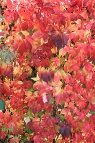 Herbst_WEin