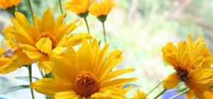 Naturheilpraxis Doris Seedorf Heilpraktikerin, Heilen mit Blüten