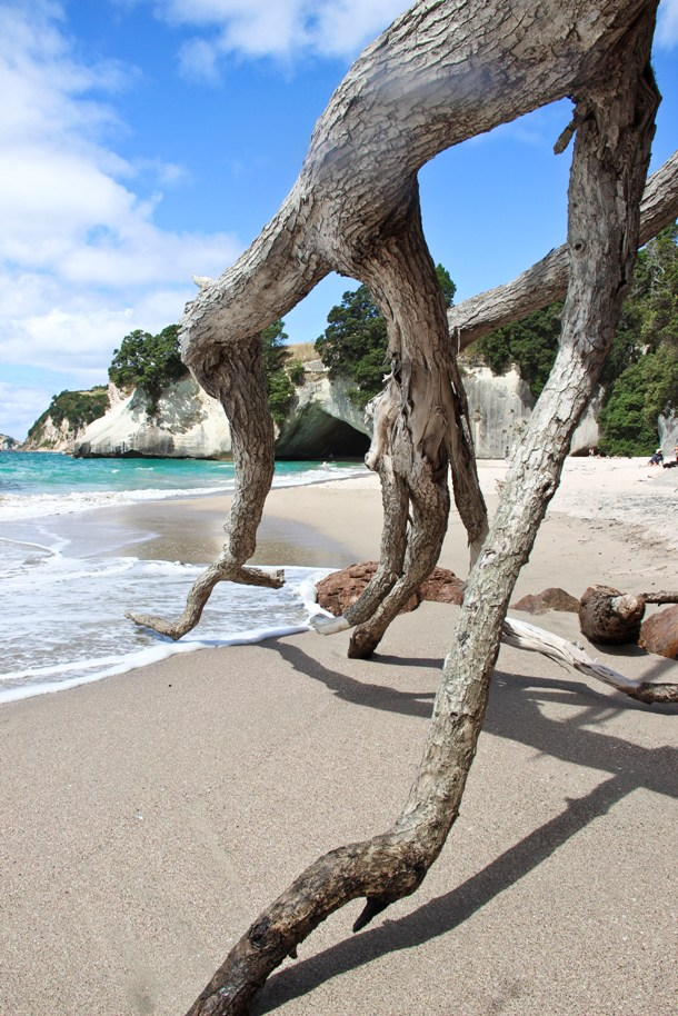 cathedral cove_3