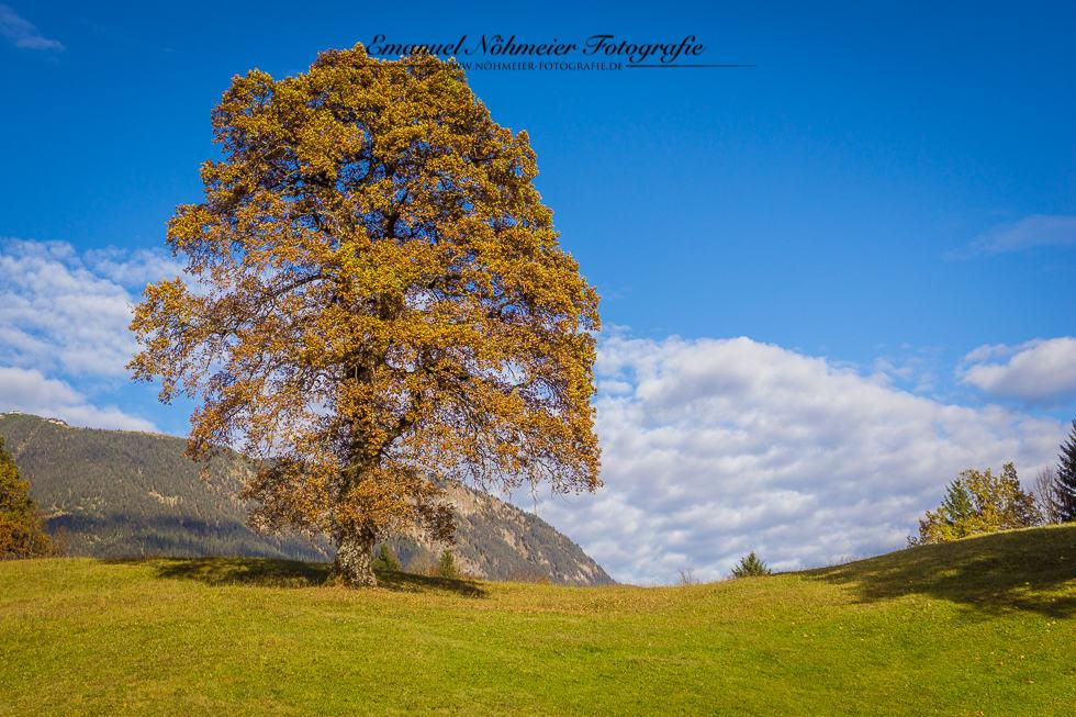 Herbst am Kochelberg