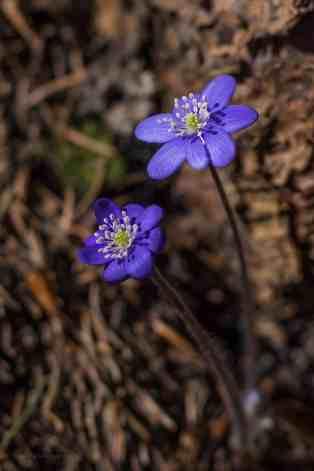 Manfreds Flora & Fauna