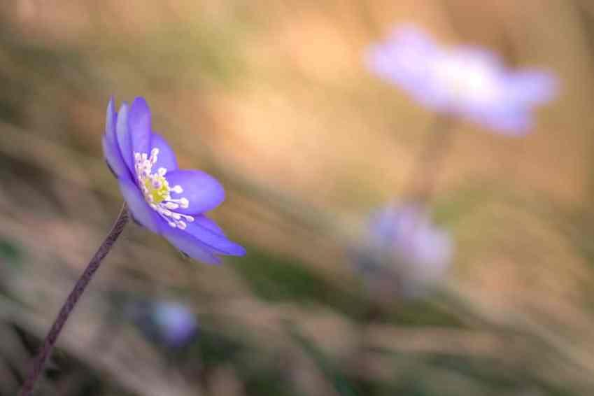 Die ersten Frühlingsboten sind zu beobachten