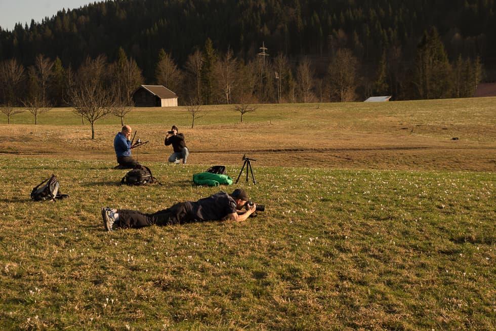 Krokuswiesen am Geroldersee, Making Of