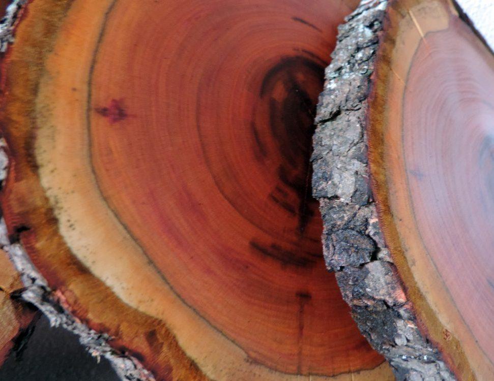 Untersetzer aus Zwetschgenbaum