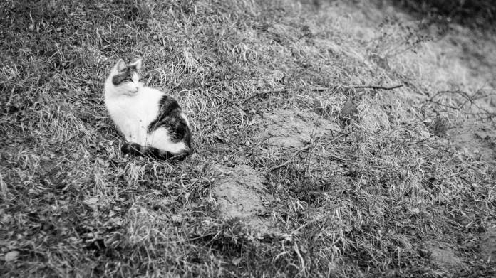 Miffy vom Hang