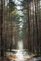 Waldfrieden.