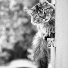 Kater Mieczyslaw am Küchenfenster.